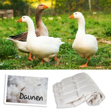 Prolana Daunen Sommerdecke Biasca